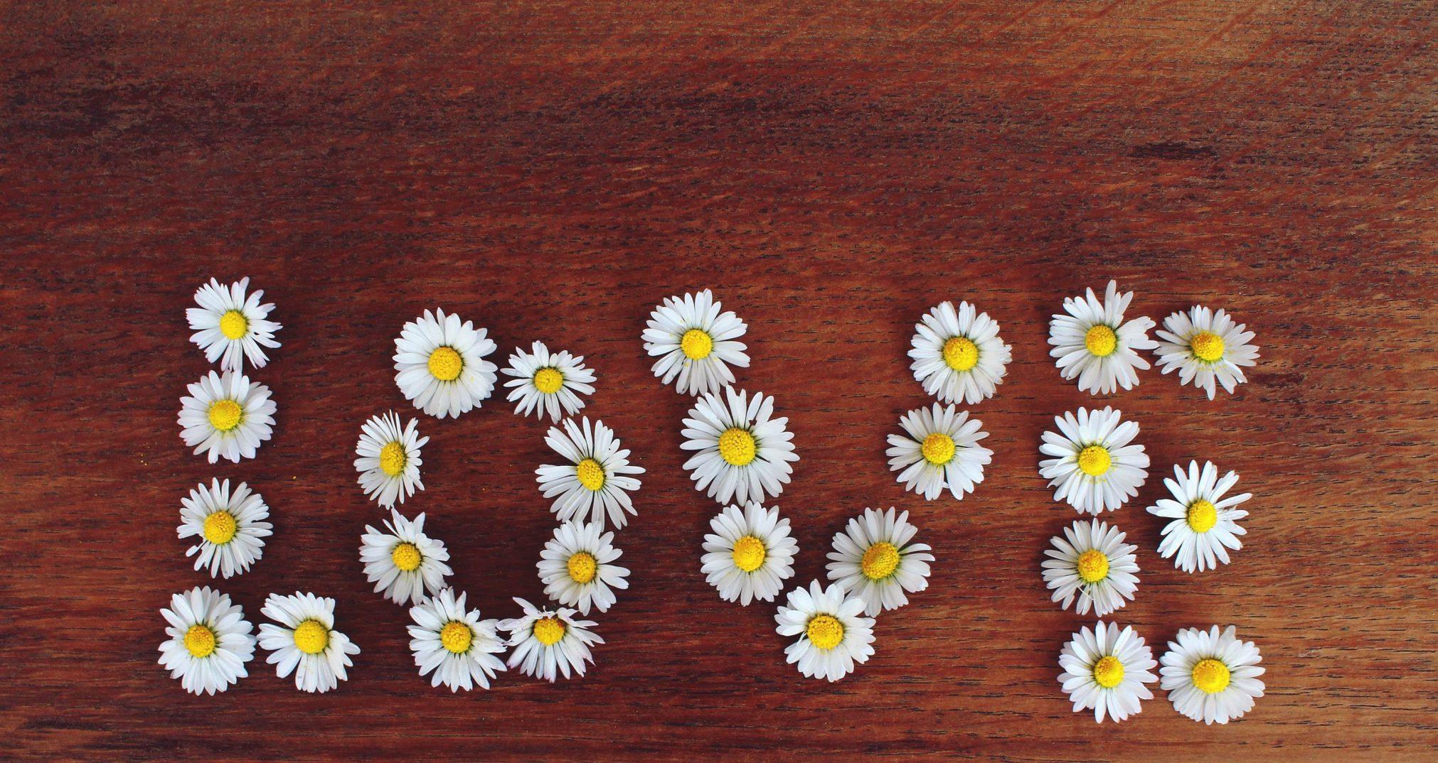 daisy-1403042-Copy