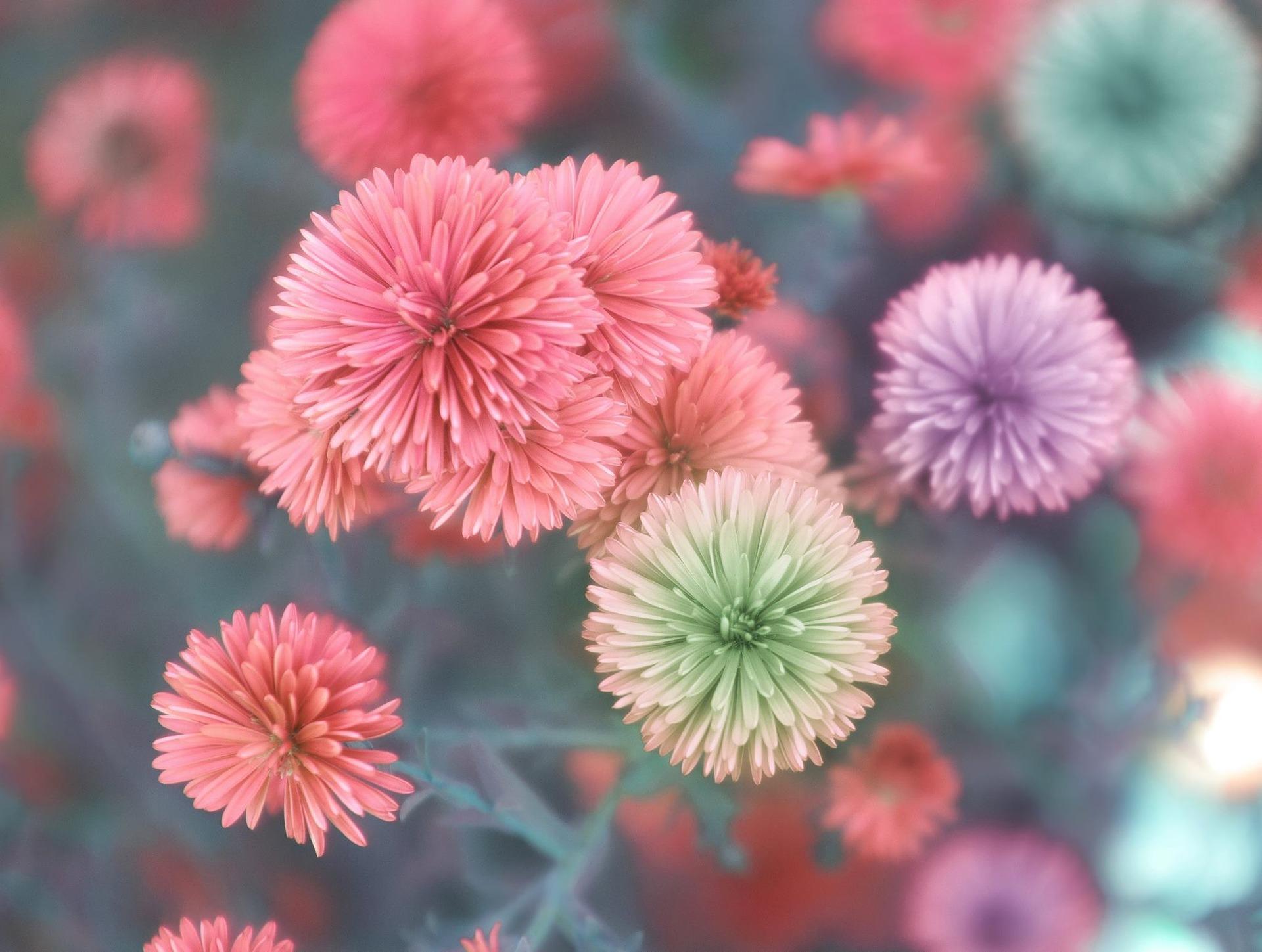 flower-3143418_1920-1